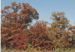 Trees_in_fall.jpg