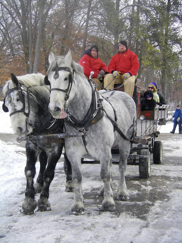 team of horses pulling a wagon in snow